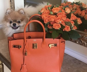 bag, flowers, and dog image