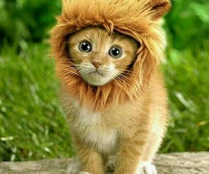 cute, cat, and lion image