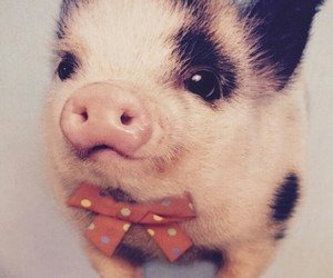 little pig, cute, and 😍 image