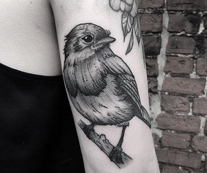 bird, ink, and inked image