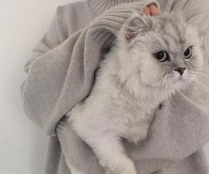 cat, animal, and grey image