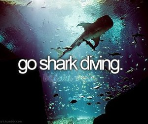 shark, before i die, and diving image