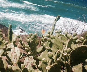 cactus, sea, and summer image