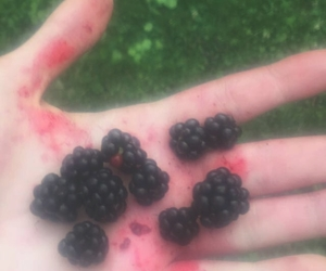 blackberry, pale, and hands image