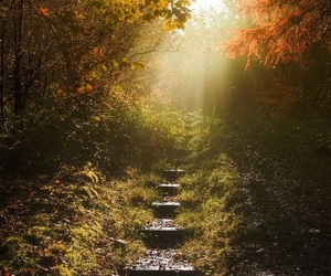 forest, ladder, and nature image