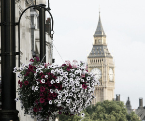london, flowers, and Big Ben image