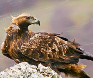 amazing, animals, and wild image