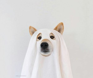 dog and ghost image