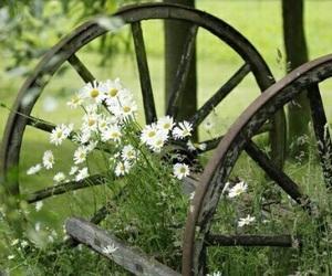 flowers, beautiful, and farm image