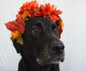 animal, autumn, and black image
