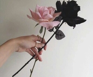 aesthetic, roses, and calming image