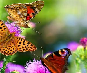 flowers, butterflies, and colourful image