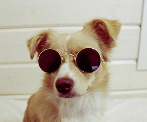 dog, animal, and cool image