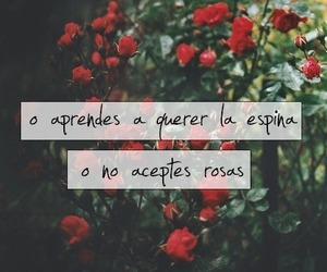 roses and frases image