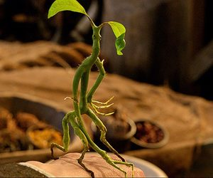 fantastic beasts, harry potter, and bowtruckle image