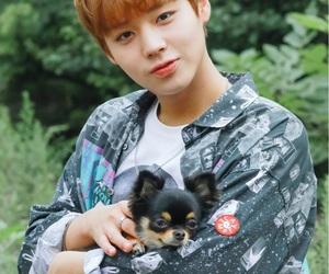 wanna one, jihoon, and kpop image