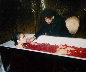the weeknd, bella hadid, and rose image