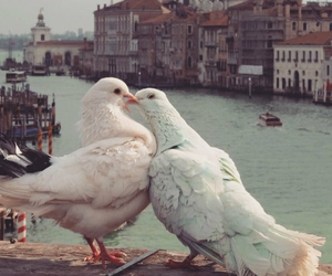 love, bird, and animal image