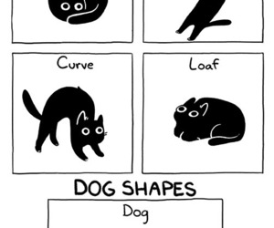 cats, comics, and funny image