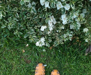 flowers, foot, and nature image