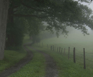 nature, fog, and green image