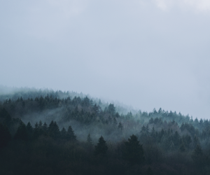 foggy and forest image