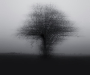 dark, foggy, and tree image