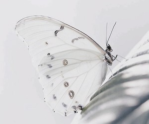 aesthetic, butterflies, and flowers image