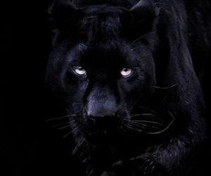 black and panther image