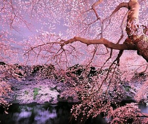 beautiful, Giappone, and kawaii image
