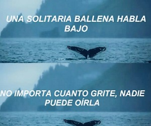 frases, bts, and letras image