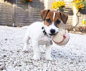 baseball, dog, and puppy image