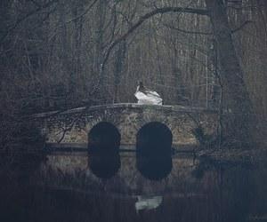 photography and bridge image