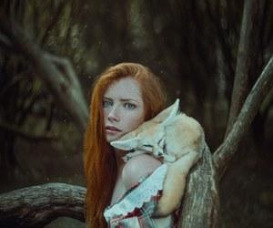 fox, photography, and animal image