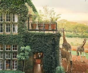 animal, giraffe, and house image