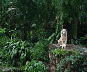 theme, tropical, and green image
