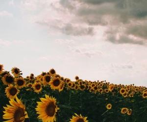 field, lockscreen, and flowers image