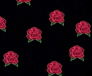 rose, background, and red image