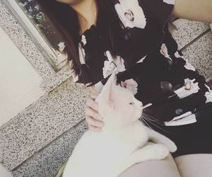 aesthetic, kitty, and white cat image
