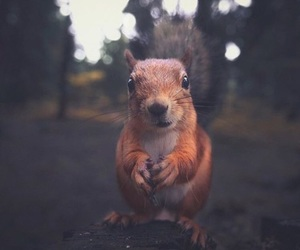 animals, fun, and cute image