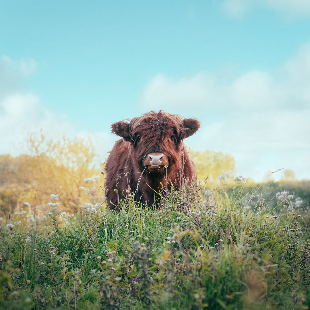 animal, beautiful, and hipster image
