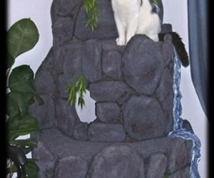 cats, mountains, and cat furniture image