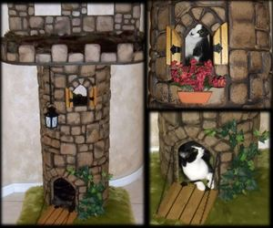 castles, cat trees, and cats image