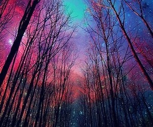 mysterious, nature, and night image