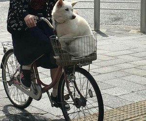 aesthetic, alternative, and bicycle image