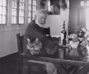 cat, ernest hemingway, and hemingway image