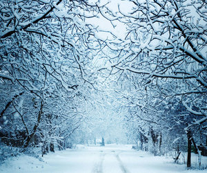 landscape, snow, and tree image