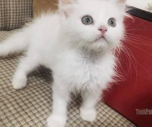 cat, zoo, and socute image