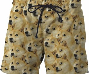 doge and shibainu image