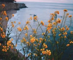 alternative, beach, and camera image